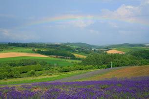 虹の出た丘の写真素材 [FYI04034011]
