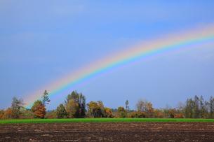 虹の出た畑と紅葉の写真素材 [FYI04034032]