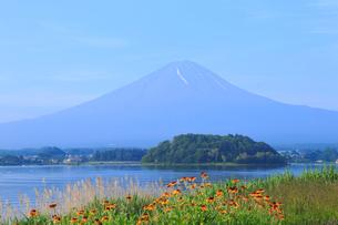 夏の富士山の写真素材 [FYI04034089]
