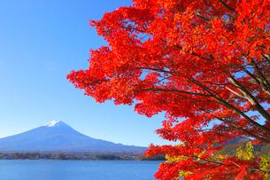 モミジと富士山の写真素材 [FYI04034104]
