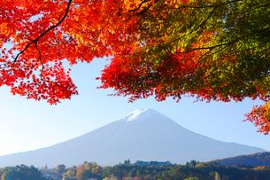モミジと富士山の写真素材 [FYI04034115]
