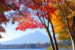 モミジと富士山の写真素材 [FYI04034116]