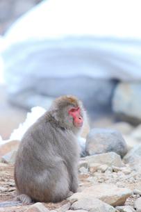 猿の写真素材 [FYI04034120]