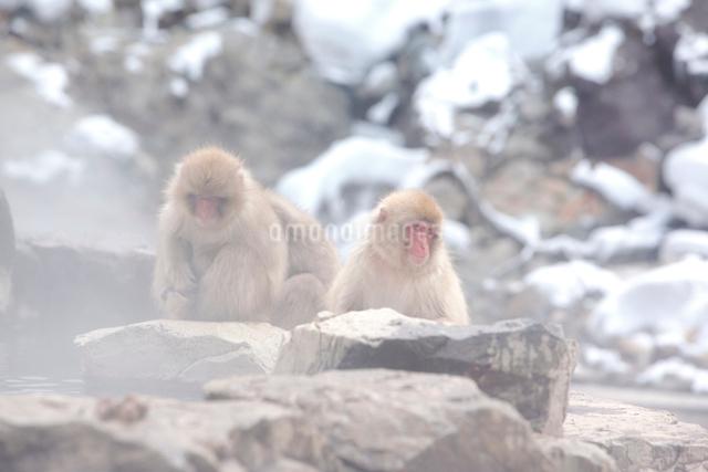猿の写真素材 [FYI04034124]