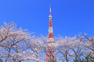 東京タワーとサクラの写真素材 [FYI04034140]