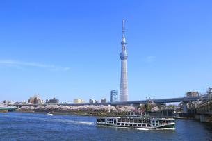 東京スカイツリーと桜の写真素材 [FYI04034144]
