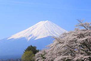 富士山と桜の写真素材 [FYI04034161]
