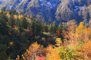 十勝岳温泉の紅葉の写真素材 [FYI04034240]