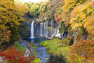 白糸の滝の写真素材 [FYI04034264]