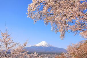 富士山と桜の写真素材 [FYI04034272]