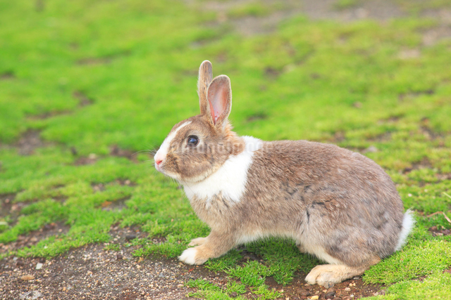 ウサギの写真素材 [FYI04034273]