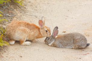 ウサギの写真素材 [FYI04034277]