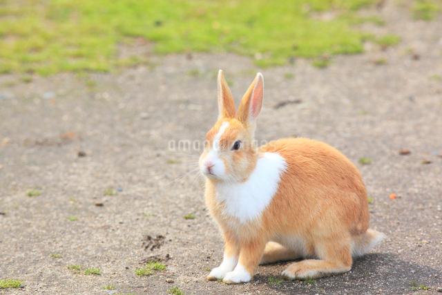 ウサギの写真素材 [FYI04034280]