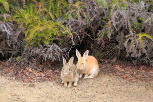 ウサギの写真素材 [FYI04034283]