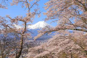 富士山と桜の写真素材 [FYI04034287]