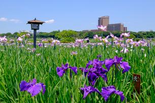 小岩菖蒲園の写真素材 [FYI04034293]