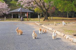 ウサギの写真素材 [FYI04034294]