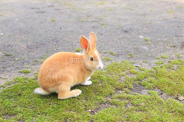 ウサギの写真素材 [FYI04034299]