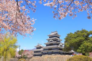 松本城と桜の写真素材 [FYI04034300]