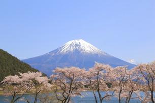 田貫湖の桜の写真素材 [FYI04034301]
