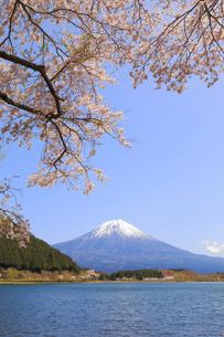 田貫湖の桜の写真素材 [FYI04034303]