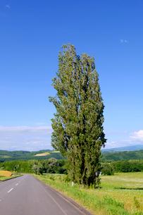 ケンとメリーの木の写真素材 [FYI04034336]