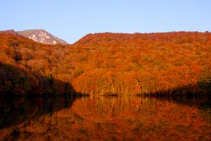 朝焼けした蔦沼の写真素材 [FYI04034347]