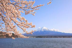 富士山と桜の写真素材 [FYI04034355]