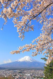 富士山と桜の写真素材 [FYI04034356]