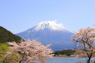 田貫湖の桜の写真素材 [FYI04034376]