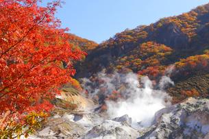 登別地獄谷の紅葉の写真素材 [FYI04034424]