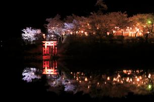 庄原上野公園の夜桜の写真素材 [FYI04034436]
