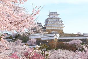 姫路城と桜の写真素材 [FYI04034446]