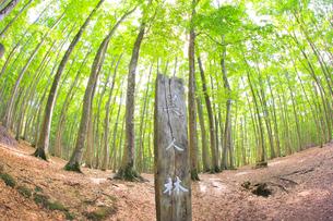美人林の写真素材 [FYI04034457]
