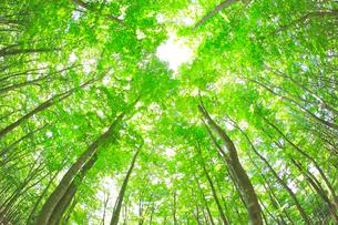 美人林の写真素材 [FYI04034458]