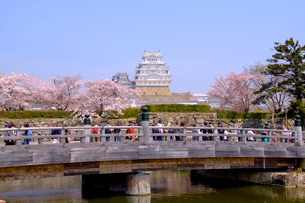 姫路城と桜の写真素材 [FYI04034461]