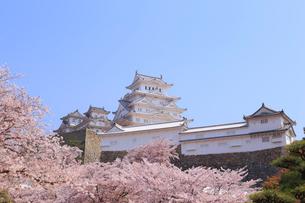 姫路城と桜の写真素材 [FYI04034471]