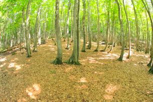 美人林の写真素材 [FYI04034481]
