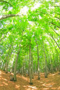美人林の写真素材 [FYI04034483]