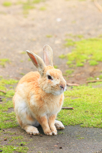 ウサギの写真素材 [FYI04034504]