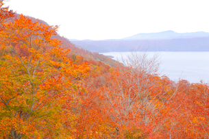 十和田湖の紅葉の写真素材 [FYI04034552]