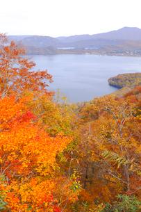 十和田湖の紅葉の写真素材 [FYI04034555]