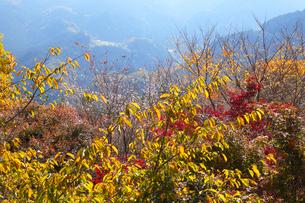 城峯公園の冬桜と紅葉の写真素材 [FYI04034586]