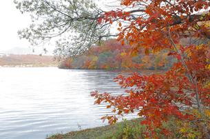 十和田湖の紅葉の写真素材 [FYI04034596]
