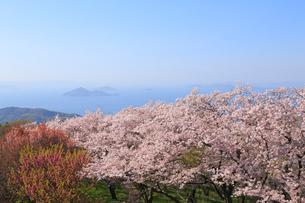 紫雲出山の桜の写真素材 [FYI04034616]