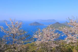 紫雲出山の桜の写真素材 [FYI04034618]