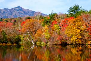 八方湖の紅葉の写真素材 [FYI04034643]