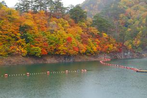 瀬戸合峡の紅葉の写真素材 [FYI04034649]
