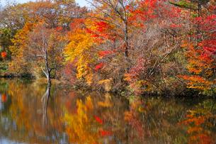 八方湖の紅葉の写真素材 [FYI04034650]