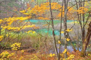 五色沼湖沼群の写真素材 [FYI04034748]